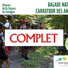 Le castor de la Largue - © Maison de la Nature du Sundgau