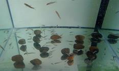 Les poissons docteurs de Marie HOCHSTATT