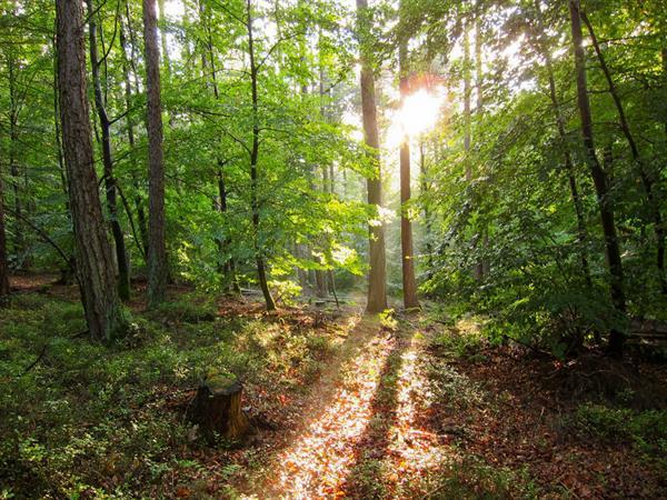 Forêt de Durmenach