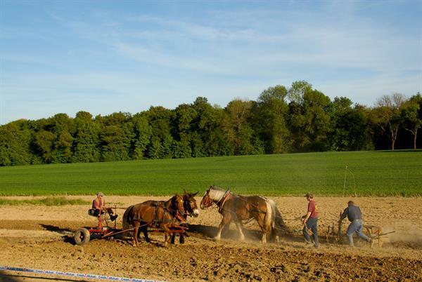 Paysage agricole du Sundgau