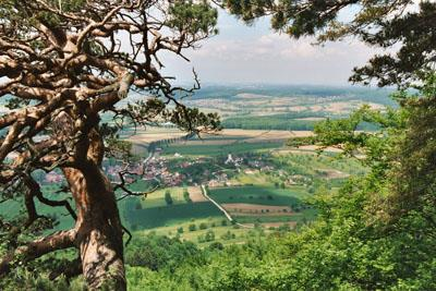 La réserve biologique domaniale de Wolschwiller
