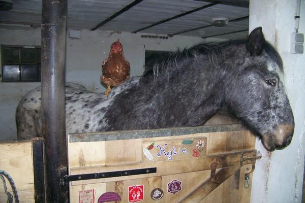 Proximité animaux - Ferme du pays d'Eaux