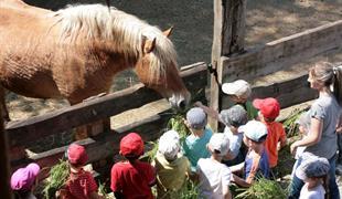 Füttern und Pflegen von Tieren auf dem Bauernhof