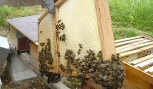Guided tour : discover how honey is produced