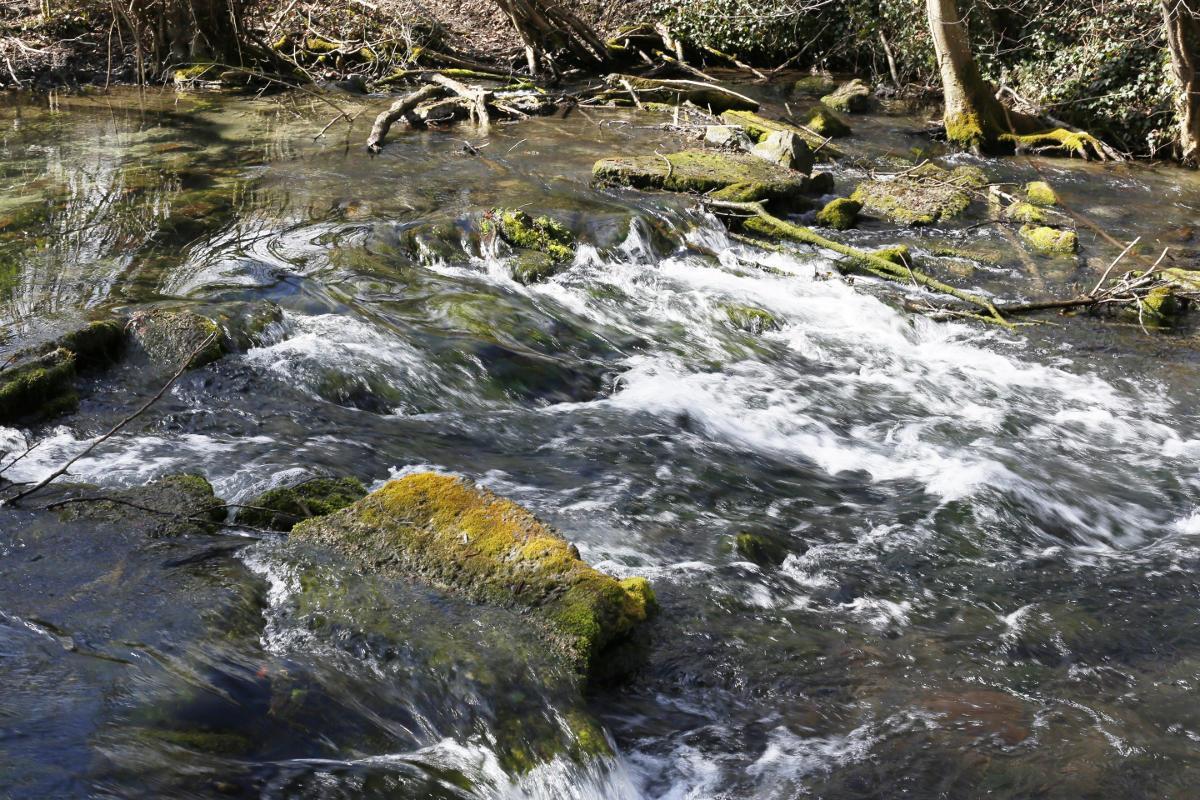 Quand la nature reprend ses droits - Vincent Muller