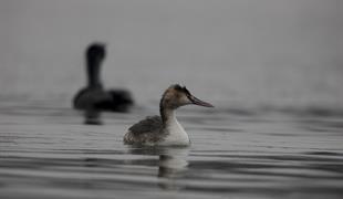 Découverte des oiseaux d'eaux