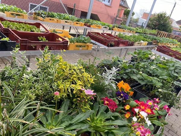 © horticulture fahrner