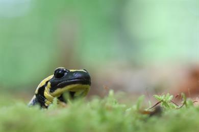 Natura 2000 oder Nachhaltige Waldbewirtschaftung
