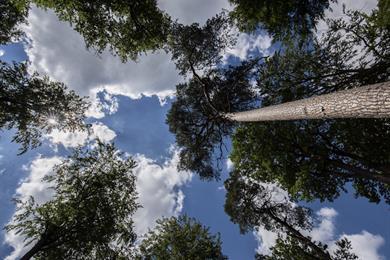 """La Forêt d'Exception®, ein Entdeckungsangebot """"100% im Freien""""!"""