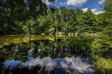 La forêt indivise de Haguenau