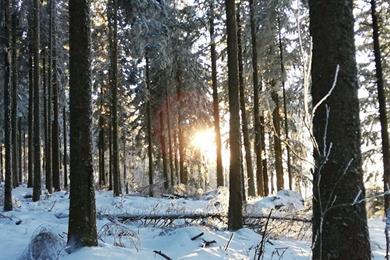 Rêverie hivernale - Sylvothérapie
