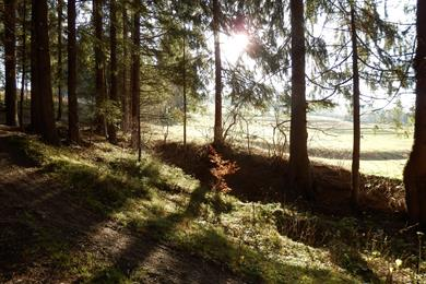 Early awakening in the forest