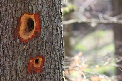 Der Baum, eine Nische der Artenvielfalt