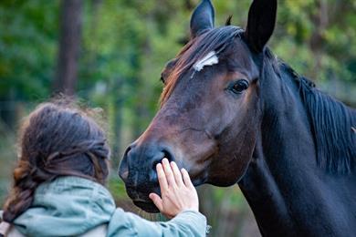 Entdeckung der Pferdepension