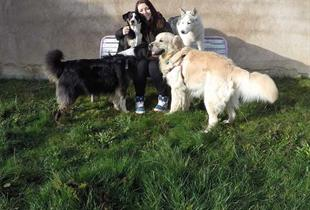 Pension canine Chez Laïka & Myla