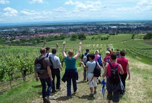 Guided visit of the vineyard