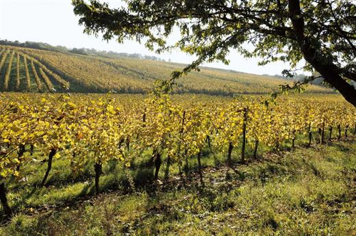 Vignes Dorlisheim