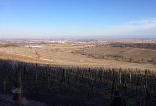 Panoramic view on the vineyard of  Dorlisheim