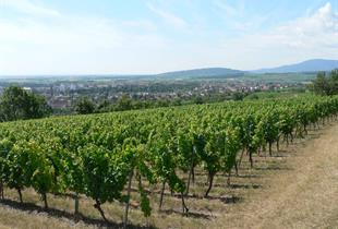 Vignoble du Bruderthal