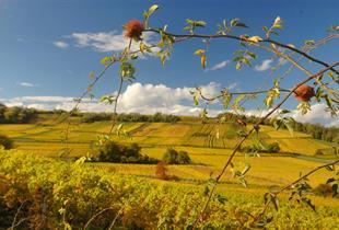 Dorlisheim vineyard