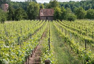 Coteau viticole le Kefferberg