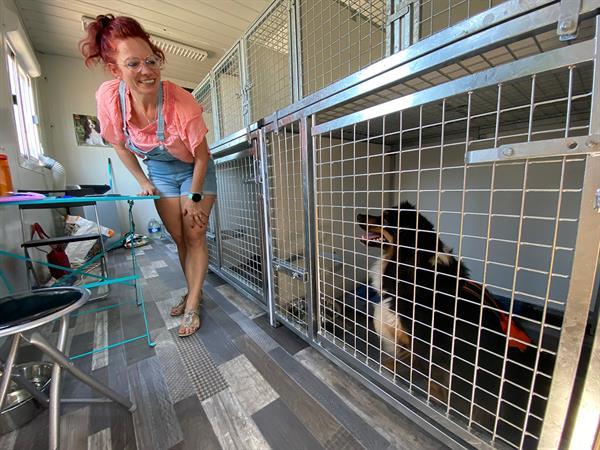 Patchguard - service de gardiennage de chien pendant vos vacances