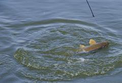 Etangs de pêche du Birryhof