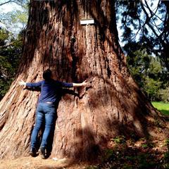 - © Le Sequoia