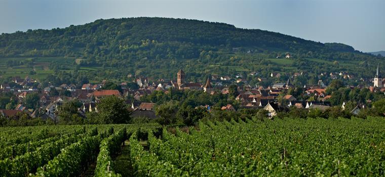 Vue sur Rosheim - ©S.Spach