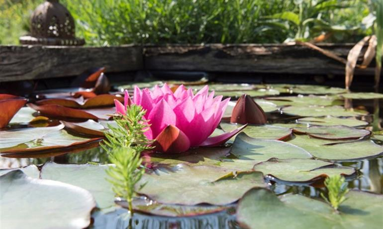 Les jardins d'Euridice - Appart'Lodge Cosy