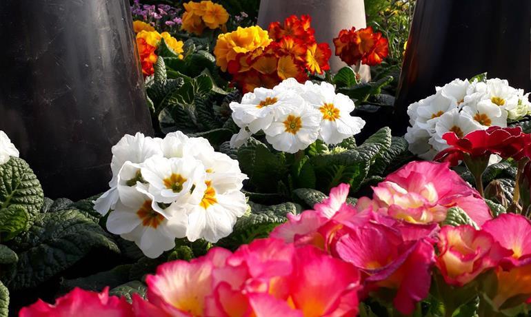 Horticulture Burckel