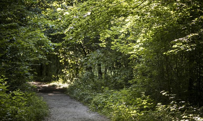 Wanderweg - Ohlungen / Uhlwiller