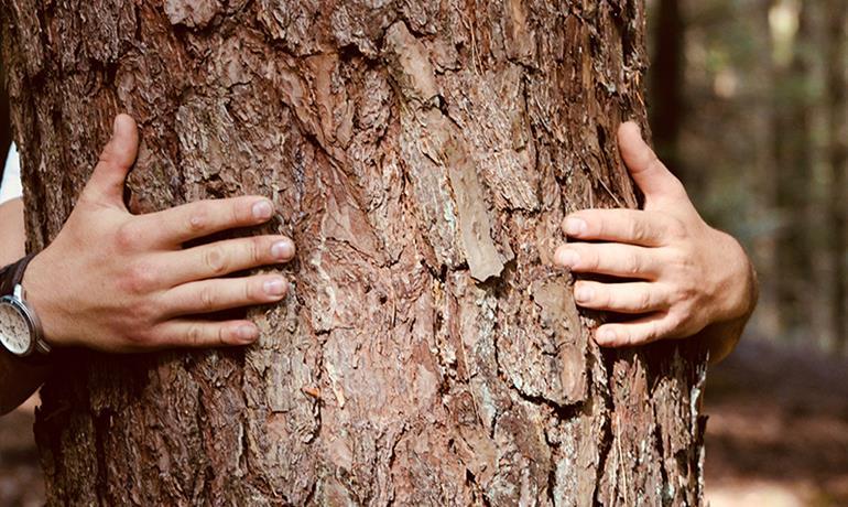 Forêt en soi