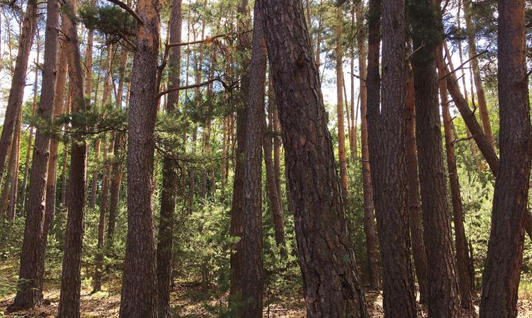 La Forêt d'Exception® de Haguenau - N°13 : La balade du Sandhaas
