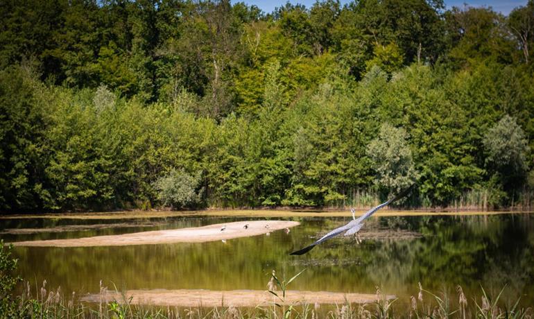 Das ornithologische Observatorium im Exceptional Forest®