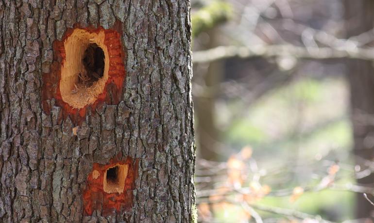 L'arbre, une niche de biodiversité - Protection faune flore – P. Jung