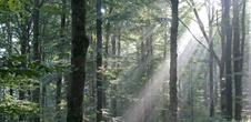A la découverte des Vosges du Nord