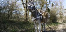 Esel-Wandern