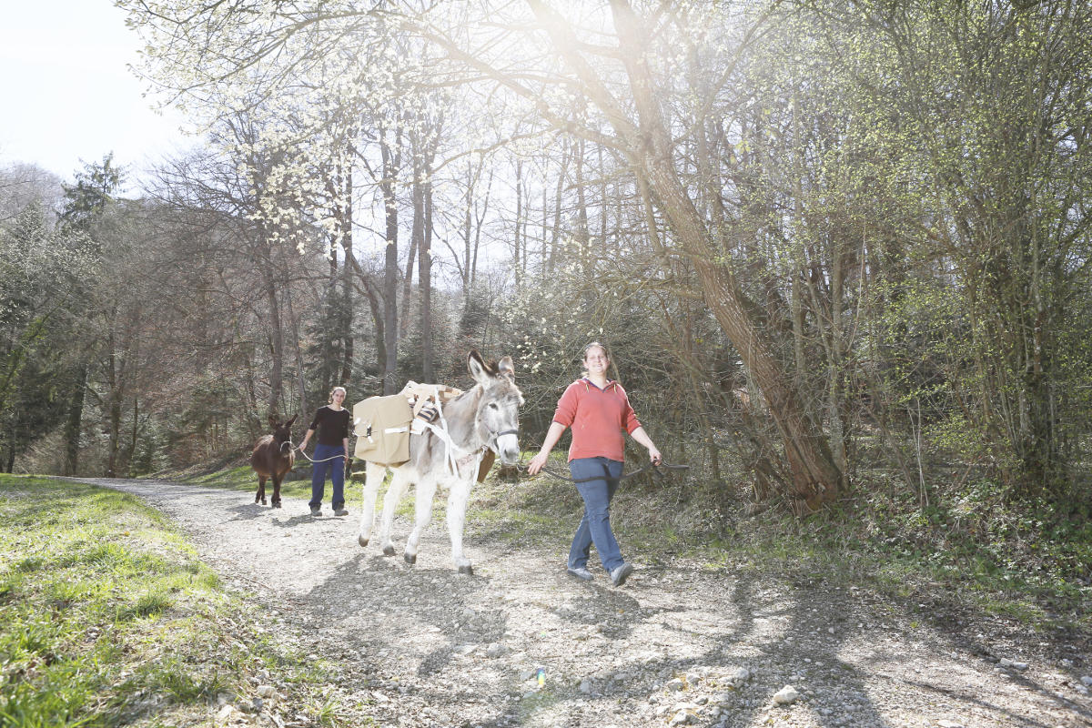 Randonner avec les ânes du Luppachhof