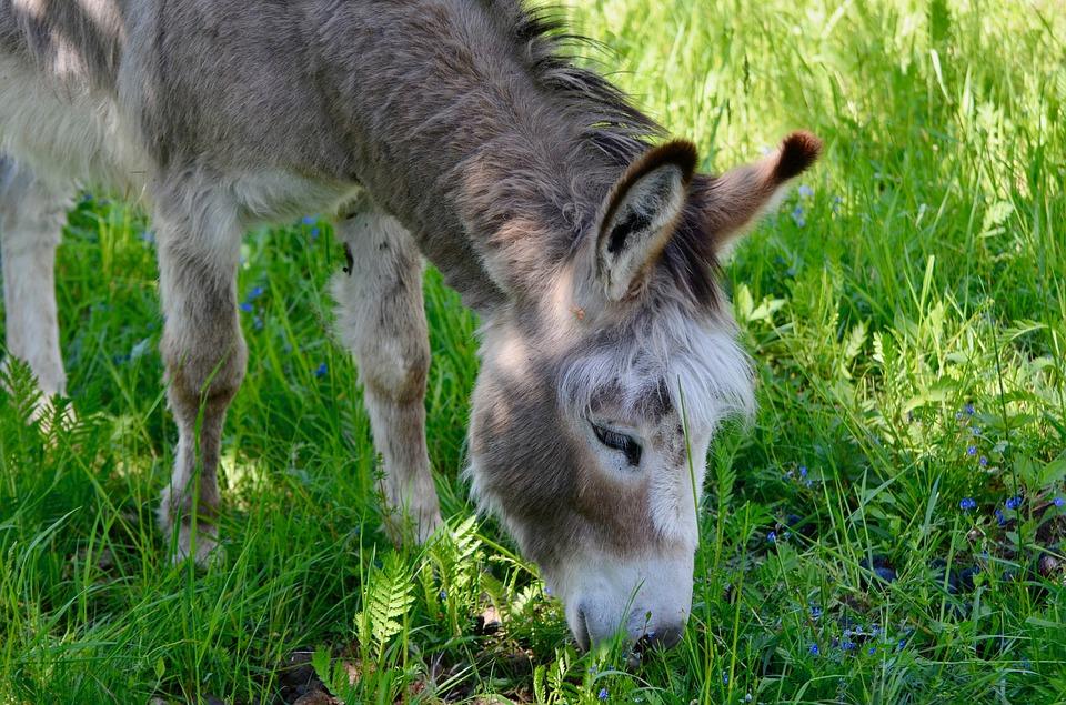 Mercredi nature : sur les pas de l'âne