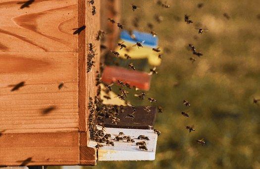 Balade nature : les merveilles de l'abeille
