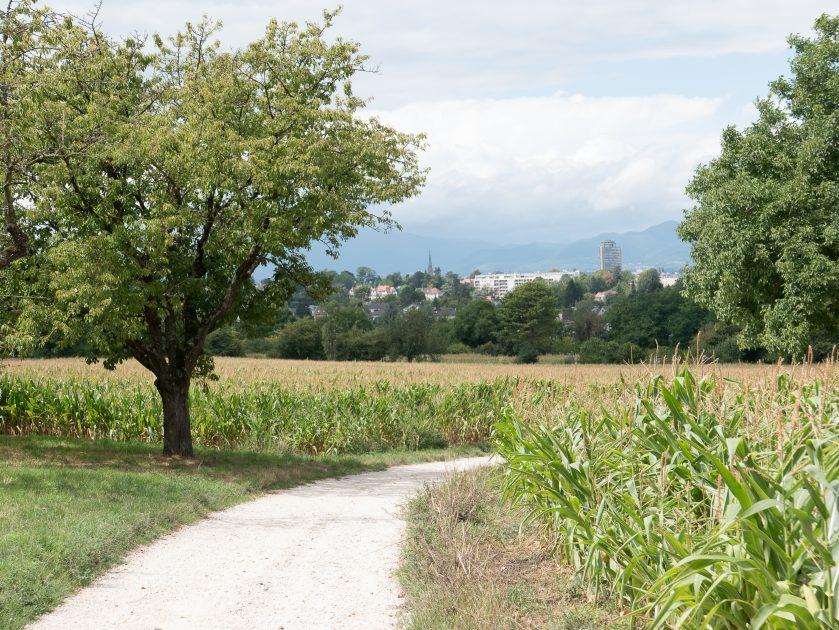 Sortie Club Vosgien : Riedisheim - Habsheim