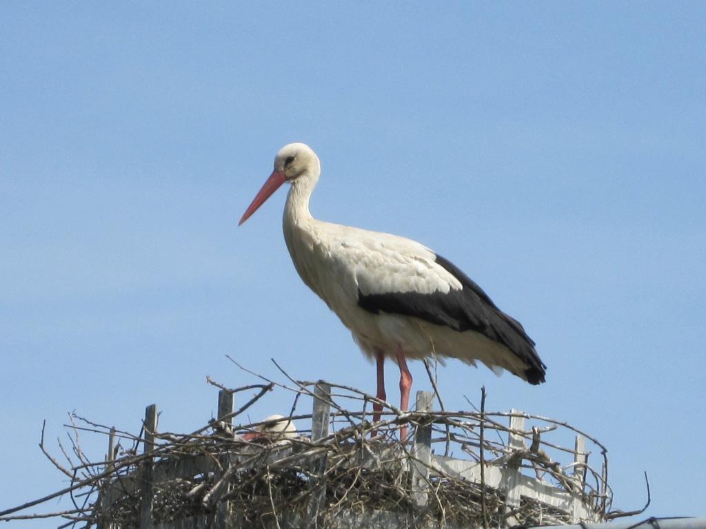 Park of storks