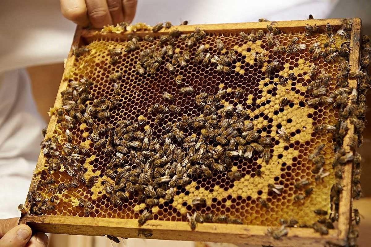 L'espace apicole