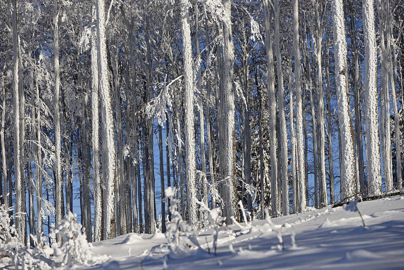 Skigebiet Champ du Feu