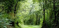 Circuit rando C09 : Le sentier panoramique et botanique
