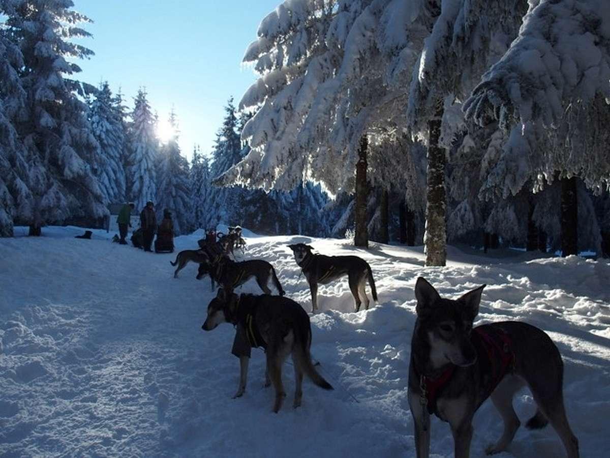 Balade avec chiens de tra neau belmont for Balade chien de traineau doubs