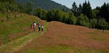 Pleasure trails: Le sentier des fruitiers