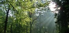 Sommer Entdeckungspfade: Présence celte sur la Magel