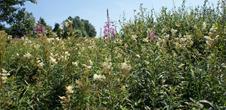 Sommer Entdeckungspfade: Ces plantes qui me parlent …